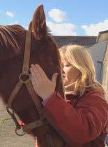 Pratique du Reiki sur un cheval