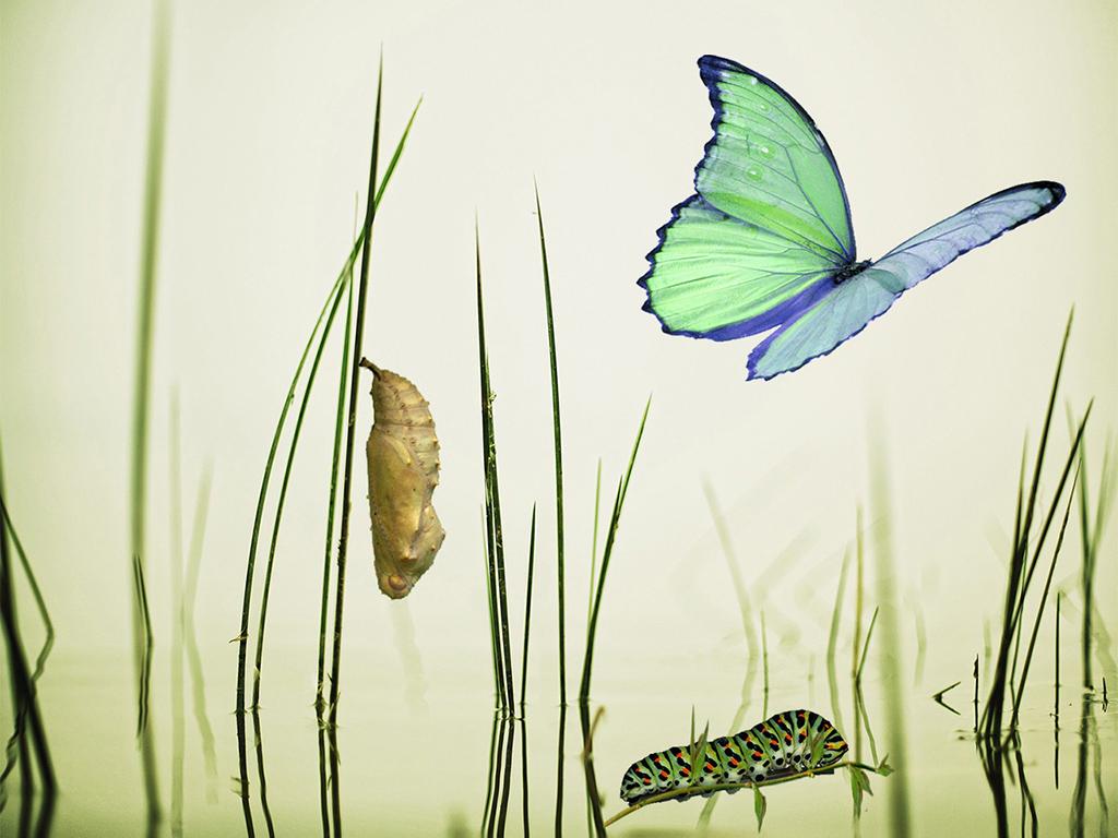 Changer un comportement - de la chenille au papillon